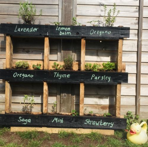 Pallet planted up
