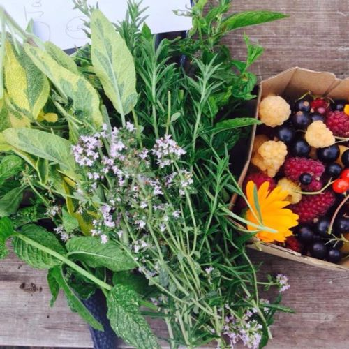 Herbs, flowers and fruit